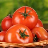 Срок годности помидоров