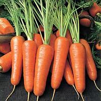 Срок хранения моркови
