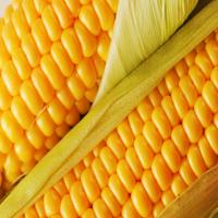 Срок хранения кукурузы
